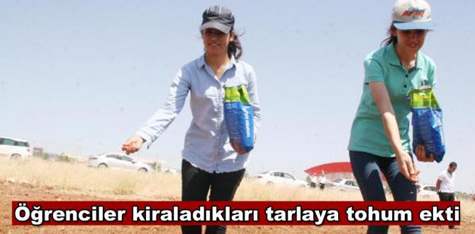 Üniversiteliler, kiraladıkları araziye tohum ekti