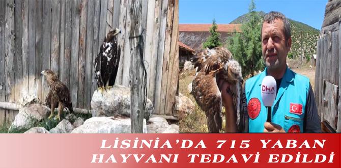 LİSİNİA'DA 715 YABAN HAYVANI TEDAVİ EDİLDİ