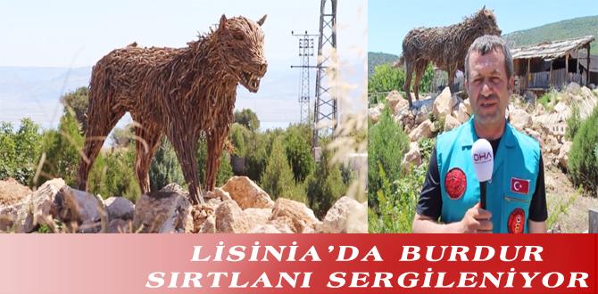 LİSİNİA'DA BURDUR SIRTLANI SERGİLENİYOR