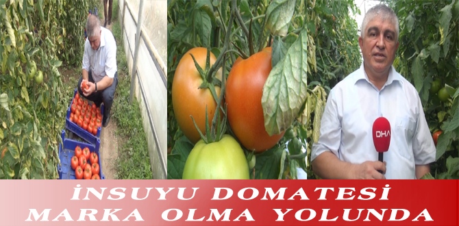 İNSUYU DOMATESİ MARKA OLMA YOLUNDA