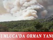 KUMLUCA'DA ORMAN YANGINI