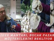 İSTİRİDYE MANTARI, BUCAK PAZARI'NDA MÜŞTERİLERİNİ BEKLİYOR