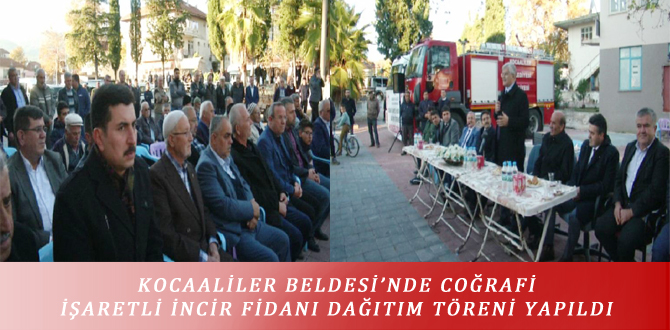 KOCAALİLER BELDESİ'NDE COĞRAFİ İŞARETLİ İNCİR FİDANI DAĞITIM TÖRENİ YAPILDI