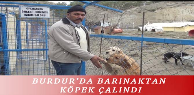 BURDUR'DA BARINAKTAN KÖPEK ÇALINDI