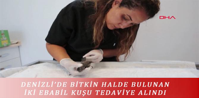 DENİZLİ'DE BİTKİN HALDE BULUNAN İKİ EBABİL KUŞU TEDAVİYE ALINDI