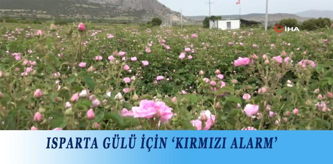 ISPARTA GÜLÜ İÇİN 'KIRMIZI ALARM'