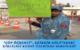 """""""ÇÖP ÖĞRENCİ"""", EĞİRDİR GÖLÜ'NDEKİ KİRLİLİĞİ KENDİ ÜZERİNDE SERGİLEDİ"""
