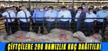 ÇİFTÇİLERE 200 DAMIZLIK KOÇ DAĞITILDI