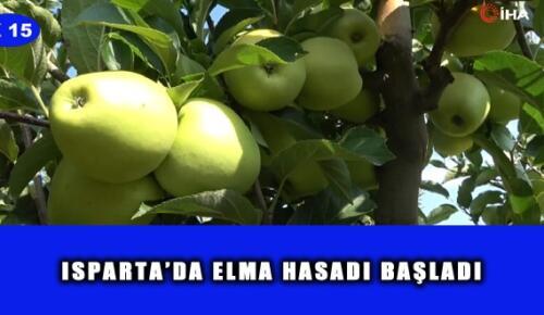 ISPARTA'DA ELMA HASADI BAŞLADI