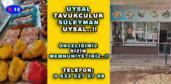 UYSAL TAVUKCULUK SÜLEYMAN UYSAL..!!